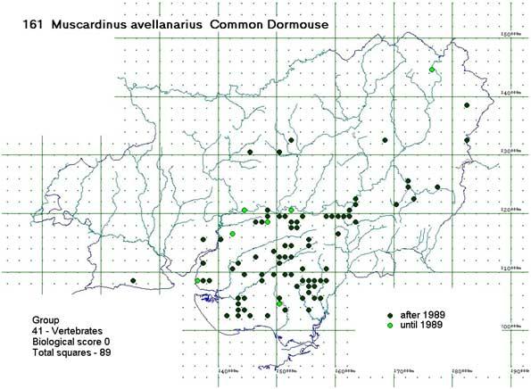 Dormouse distribution