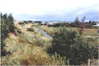 Ditch north-west of Berwick Roundabout, October 1991, good water vole habitat.      Photo:  I.K.Morgan